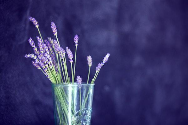 lavender-tea.jpg