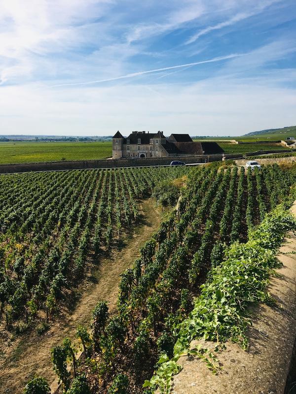 the-des-grandes-vignes.jpg